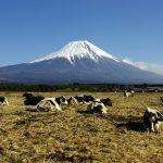 a_pasture_in_asagiri-kogen